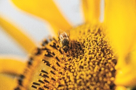 positive_action_for_pollinators_and_biodiversity